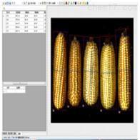 SYKZ-A玉米考种分析系统
