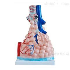 肺泡解剖放大模型