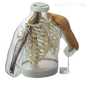 高级上臂肌肉注射及对比模型(带检测警示系统)|护理训练模型