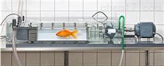 鱼类行为观测呼吸代谢设备