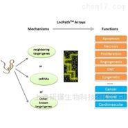 LncRNA芯片定制检测服务