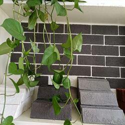 240*60外墙柔性瓷砖