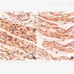 动物心脏组织免疫组化实验服务