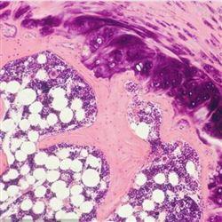 大鼠骨组织脱钙实验服务