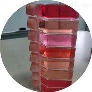 兔肠间质细胞 免疫荧光鉴定
