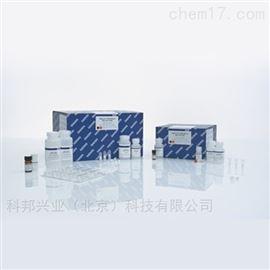 QIAGEN 51104/51106DNA纯化试剂盒提取