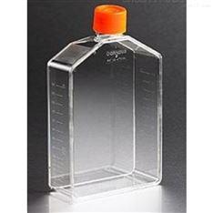 康宁 Corning175cm2 培养瓶Angled颈透气盖