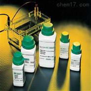组织细胞总蛋白抽提检测试剂盒