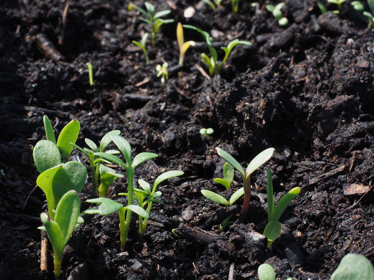 土壤污染治理进展如何?十四五会有哪些不同