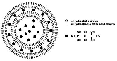 机制氯膦酸盐脂质体