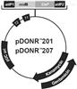 pDONR207载体,植物系列质粒