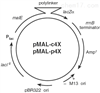 pMal-c4X載體,大腸系列質粒